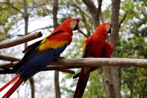 parrotsresized
