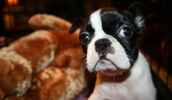 Pupils Praise Peculiar Pets